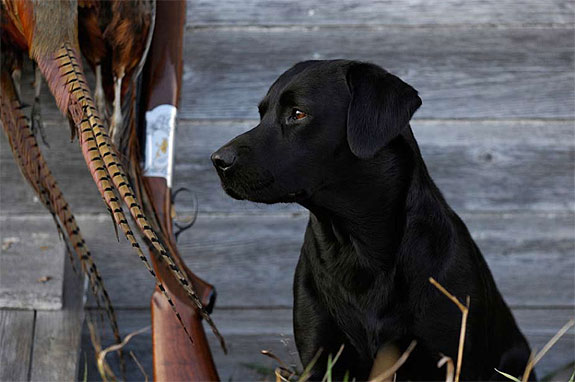 gentlemans_gundog_09_2